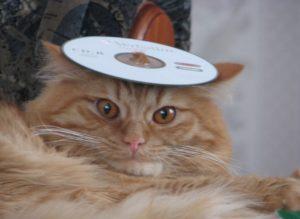 стресс у кота
