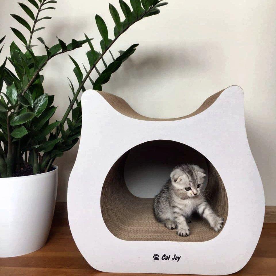 Выбираем домик для котенка